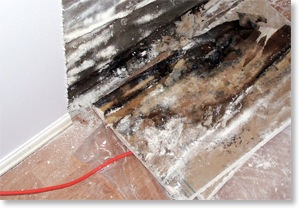 hidden mould can impact indoor air quality