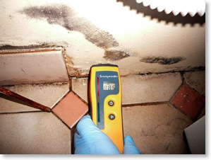 moisture reading of wall cavities are a standard part of the mould inspection