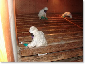 mould remediation, mould removal in a new home