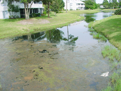 pond algae bioremediation