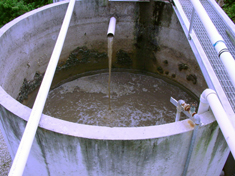 wastewater treatment, bioremediation in wastewater facitities